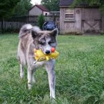 Senka plays with her toy duck