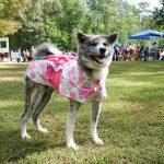 Senka in her pink kimono