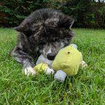 Gokkai with squishy toy face