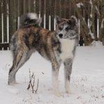 Senka's first snow