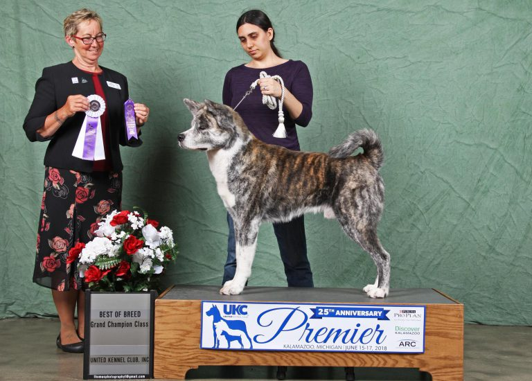 Professional shot with Judge Polly A. Dake-Jones showing off his Best of Breed and Grand Champion Class win